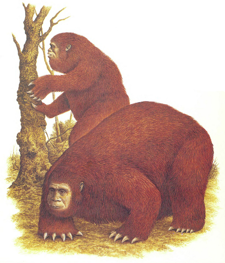 This article isn't about SpecBio. But if pre-hominids were vaguely sloth-like in some ways, a different trajectory of hominid evolution might have resulted in a radiation of increasingly sloth-like primates… in which case, maybe things like this could have evolved. Maybe. This is  Giganthropus , a fictional sloth-like hominid featured in   Dougal Dixon's 1990  Man After Man   . Image: Philip Hood, in   Dixon (1990)  .