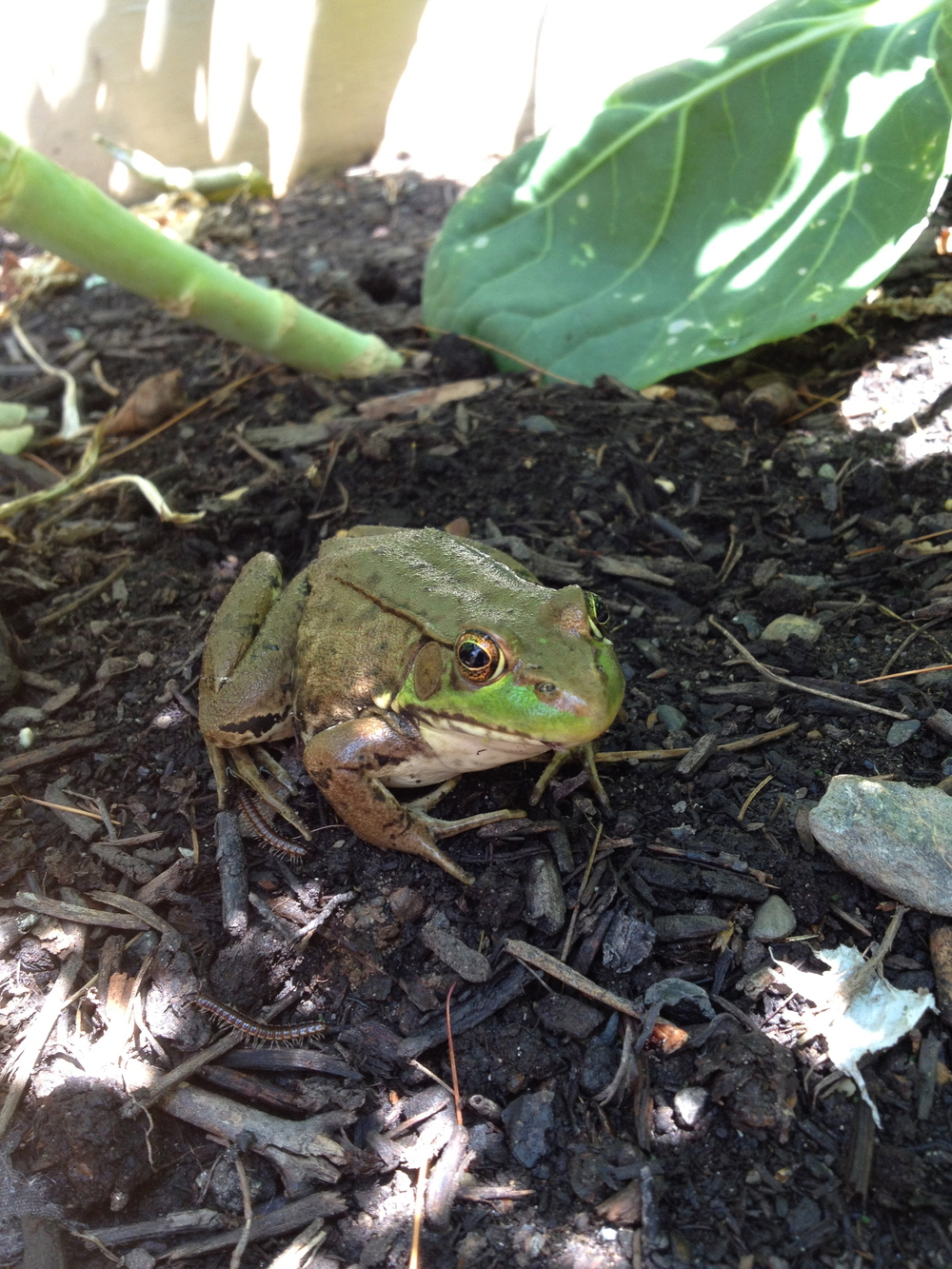 A frog came by to keep me company.