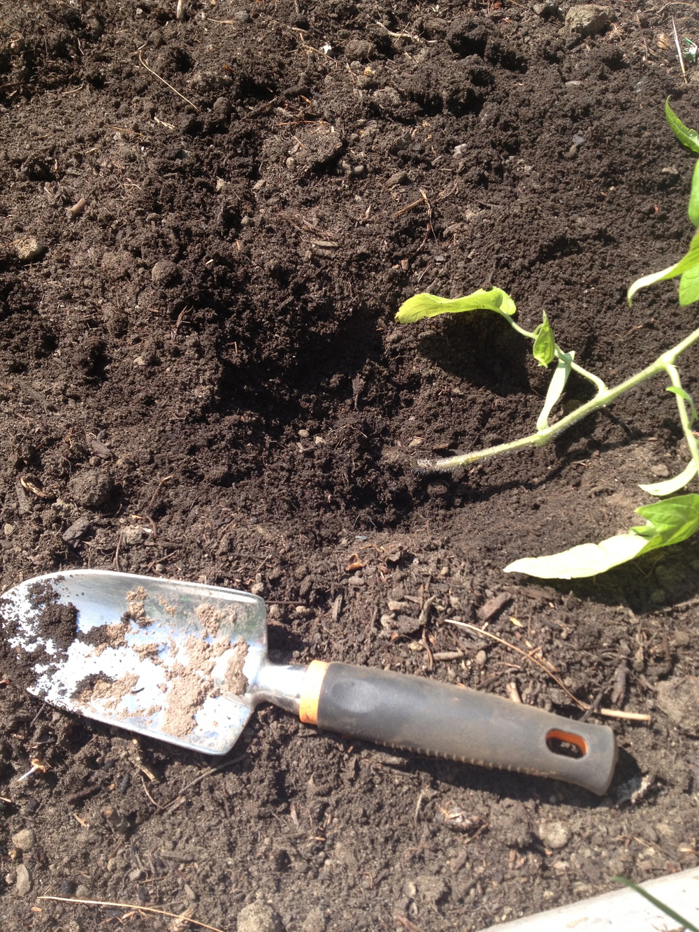 Put your tomato plants on their side before burying them.  Don't worry, they'll straighten out.