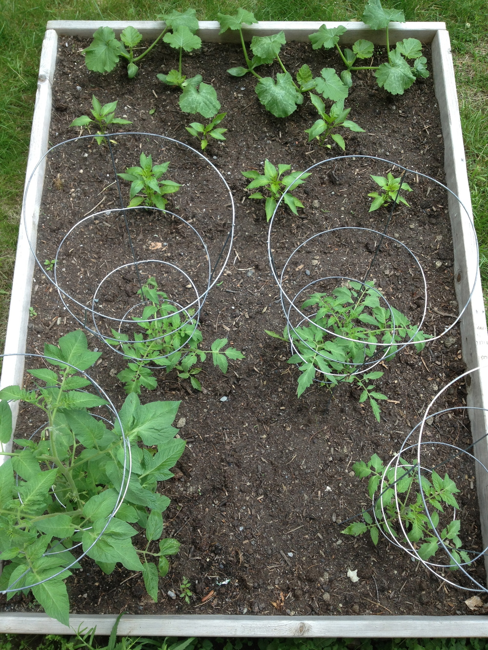 Tomatoes, peppers and zucchini.  (Front to back).