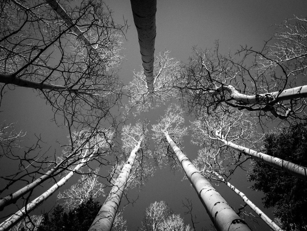 Birch.Flagstaff [digital]