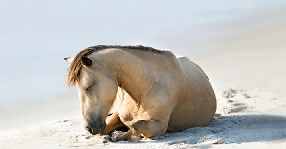 resting_horse_home.fw.png