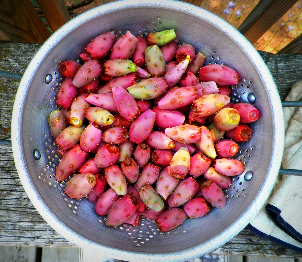 "Tunas or Prickly Pear Cactus ""Pears"""