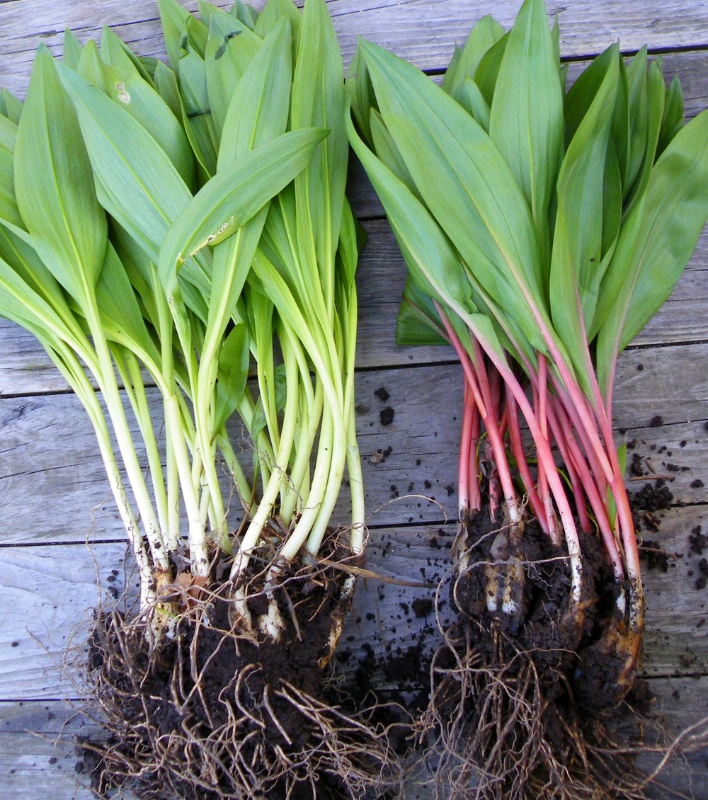 Ramps color variations