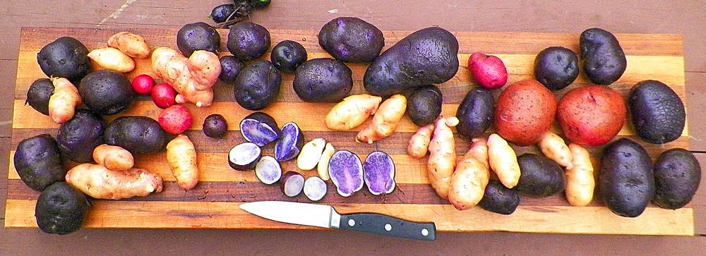 Various Fingerling Potatoes