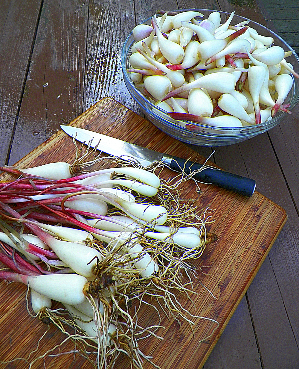 late season ramps