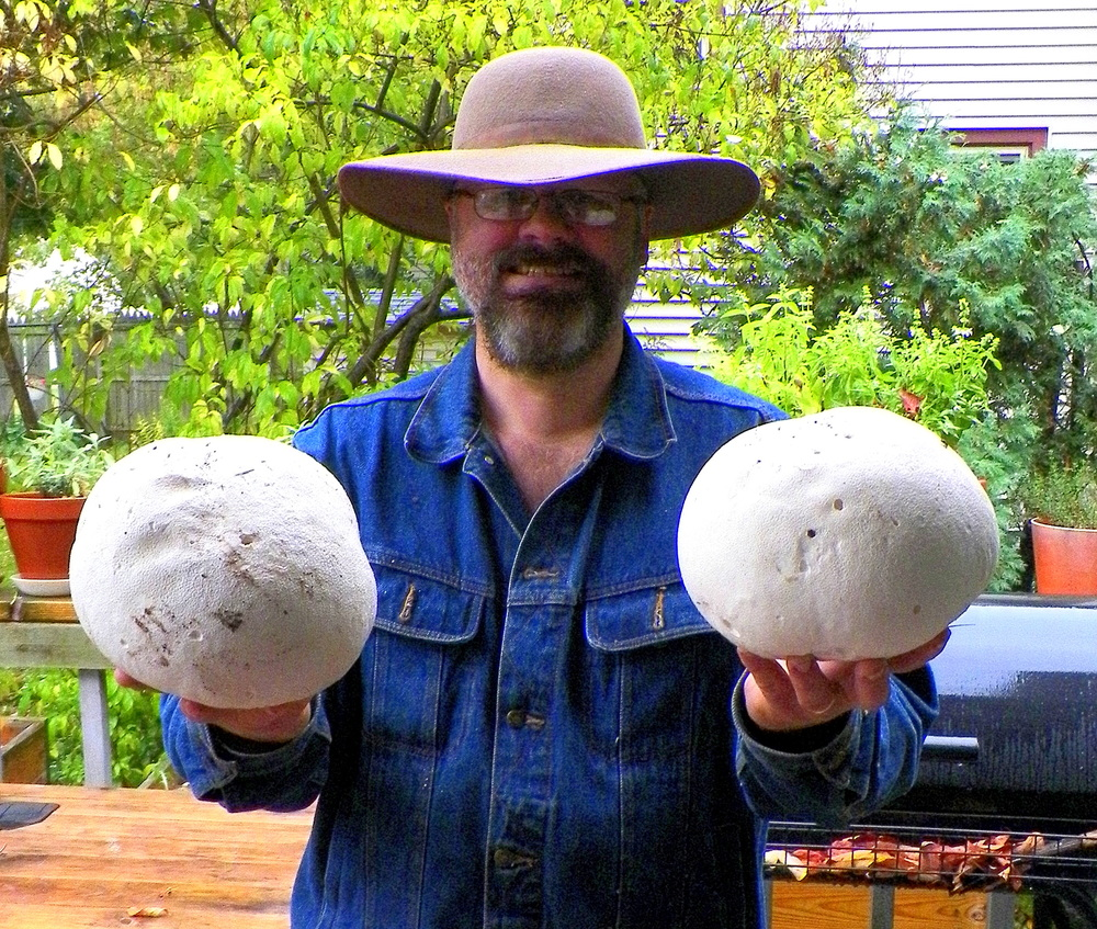 A couple of modest though still impressive examples of  calvatia gigantea .