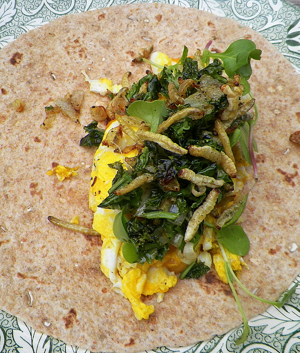 waxworm breakfast wrap III