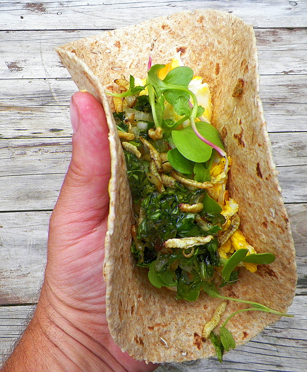 waxworm breakfast wrap IV