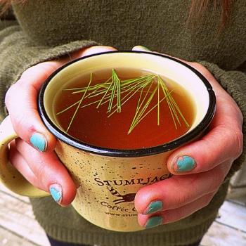 Chaga/Pine Needle Tea