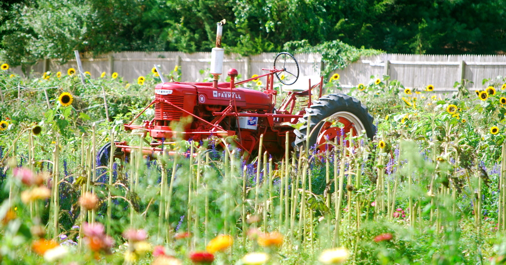 Tractor in Flowers
