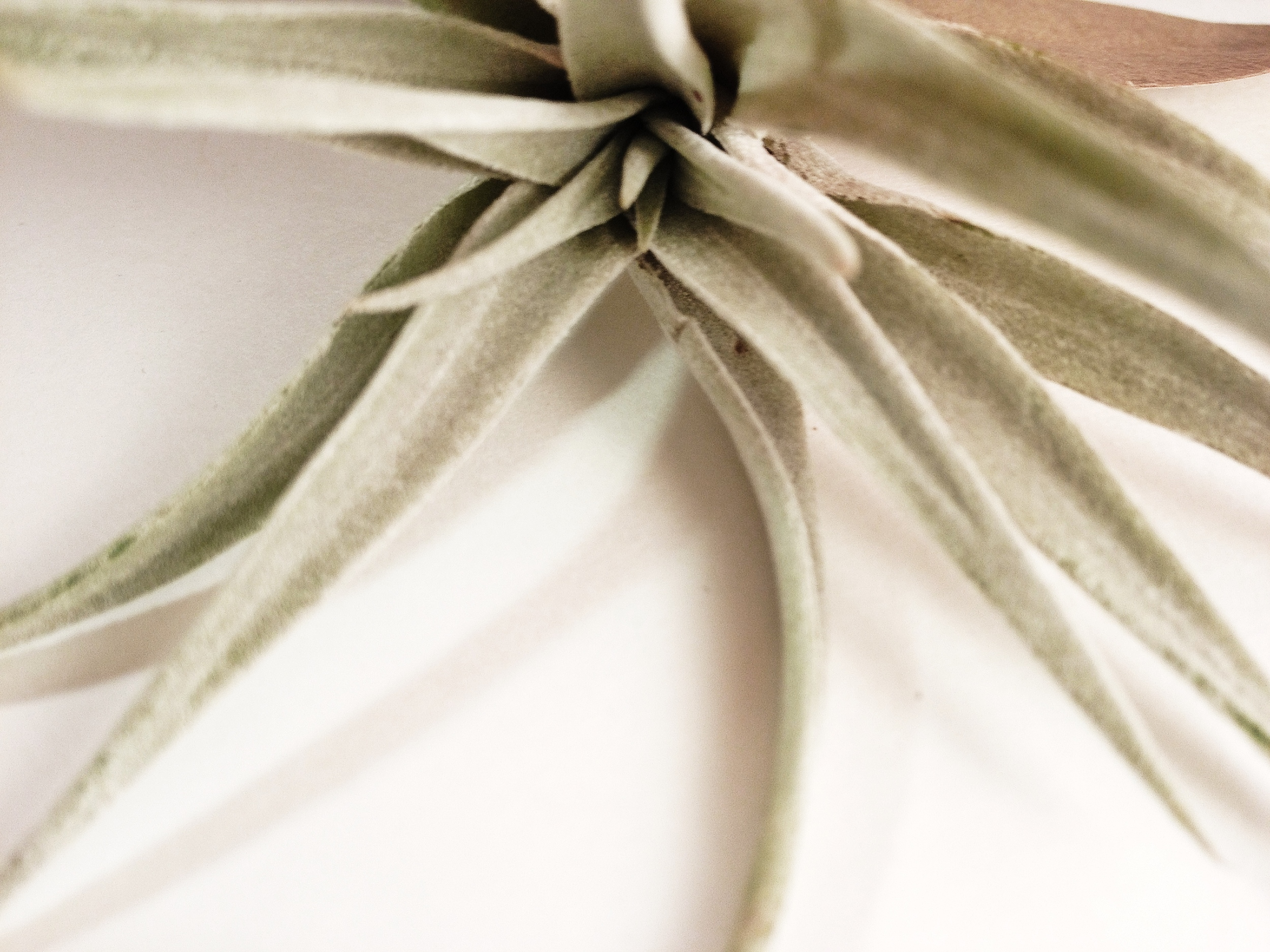 air plant from West Elm in Chelsea