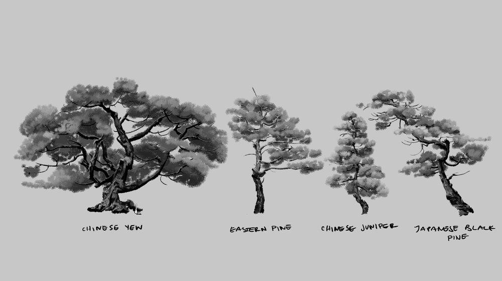 japanese_black_pine2.jpg