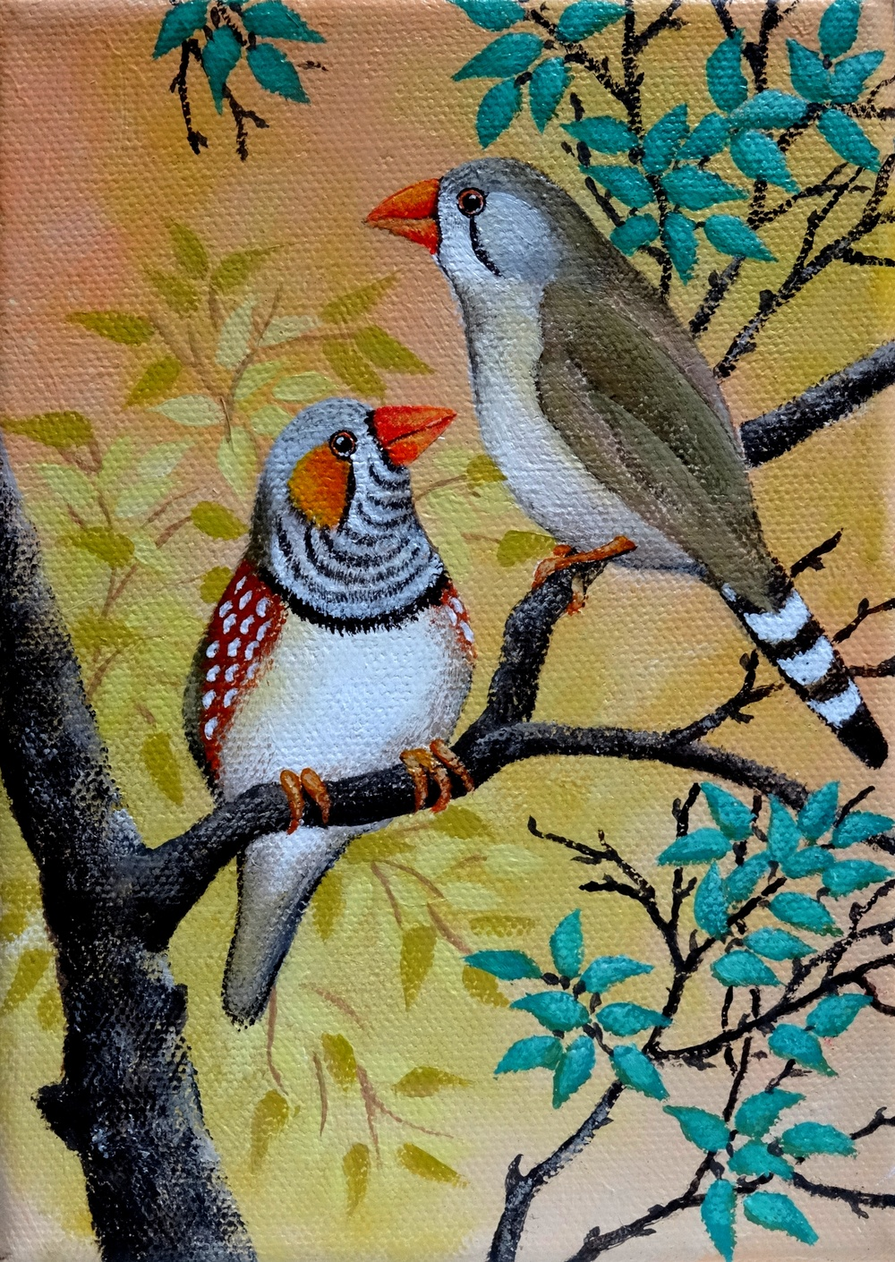 Pair of Zebra Finches.JPG