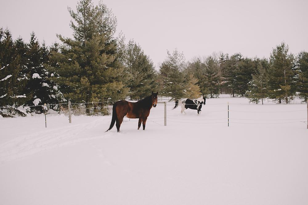 Horses018.JPG