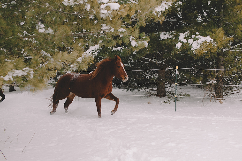 Horses012.JPG