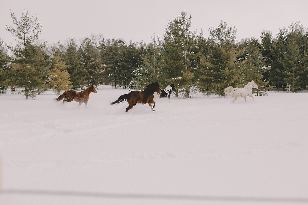 Horses023.JPG
