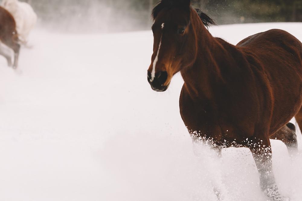 Horses030.JPG
