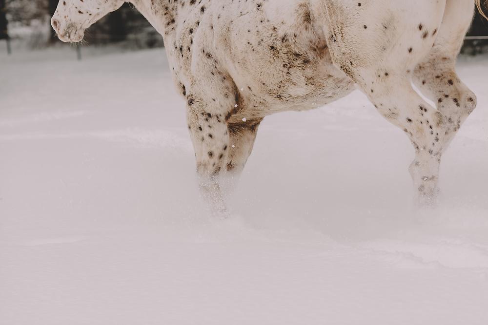 Horses033.JPG