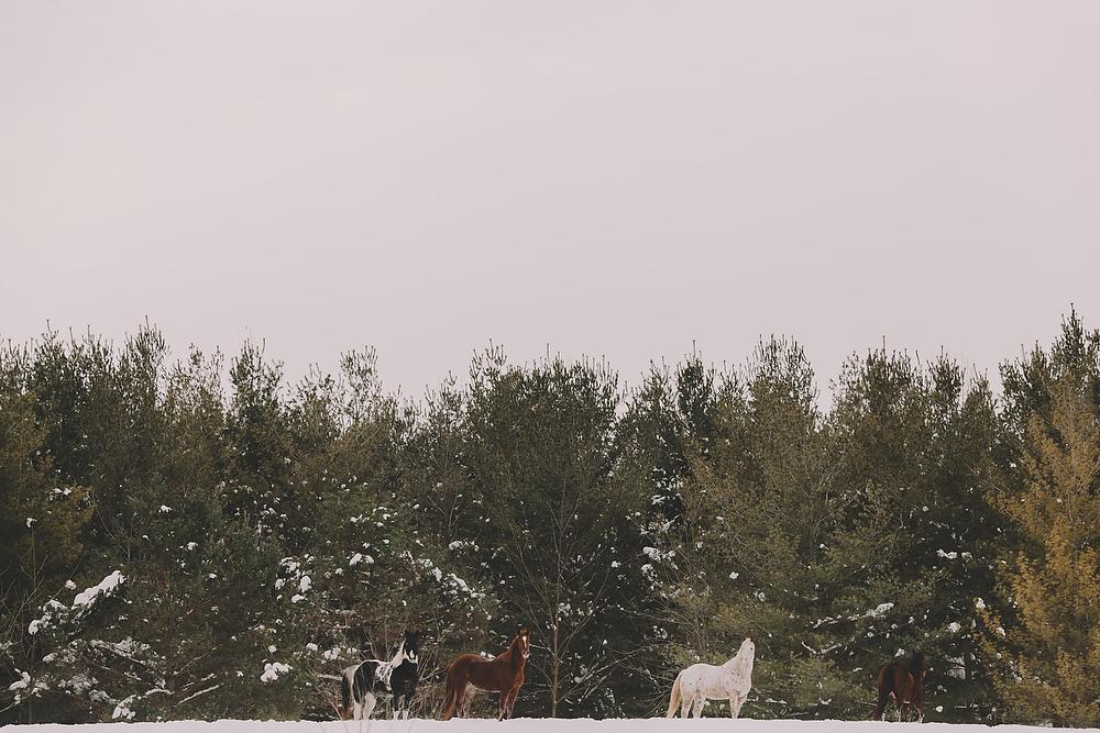 Horses038.JPG