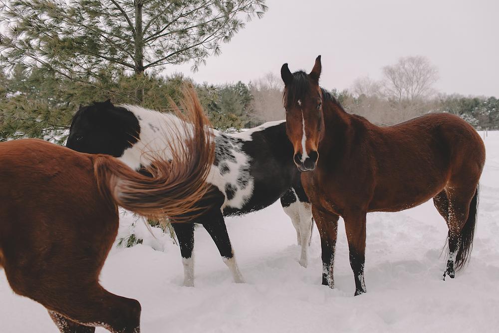 Horses051.JPG