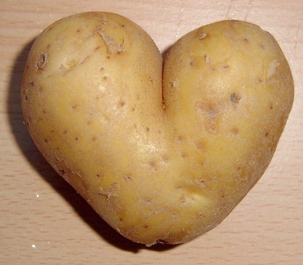 potato_heart_mutation11.jpg