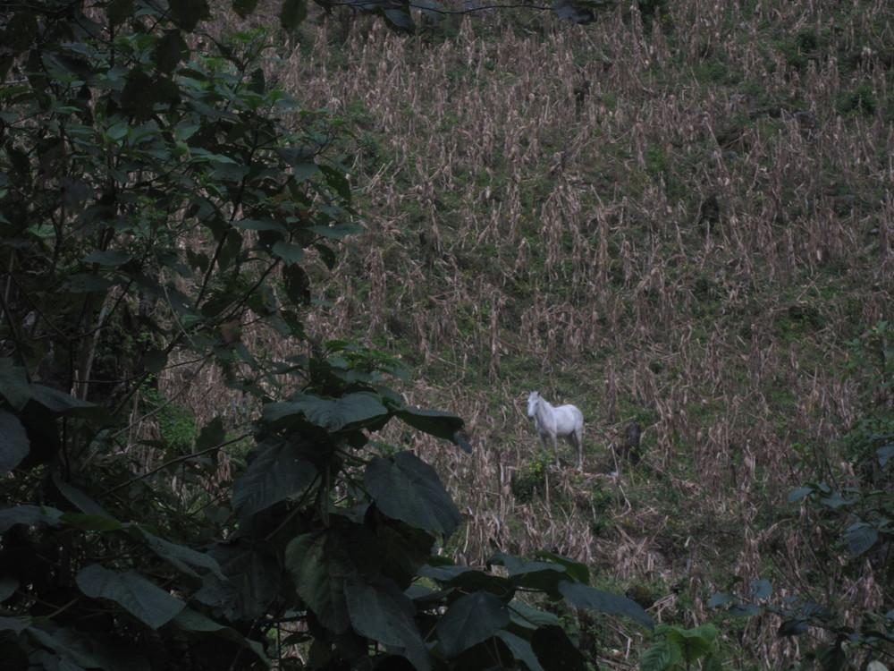 2015-01-09_Guatemala_Dylan_Pu.Ying.Huang527.JPG