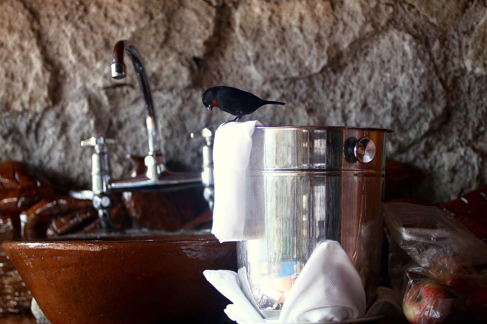 2015-12-18_St_Lucia_Ladera_Birds_Pu.Ying.Huang 0048.jpg