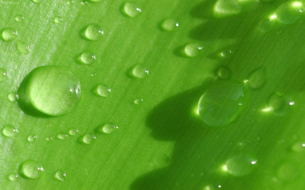 Dewdrop (Detail)