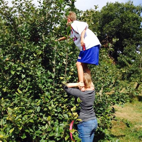 K-4 apple picking.jpg