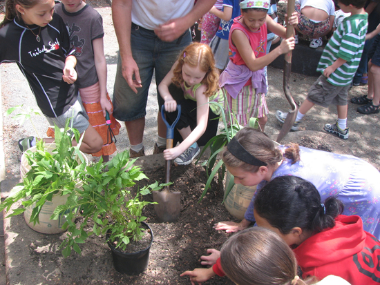 Planting in the new school garden with PS 87