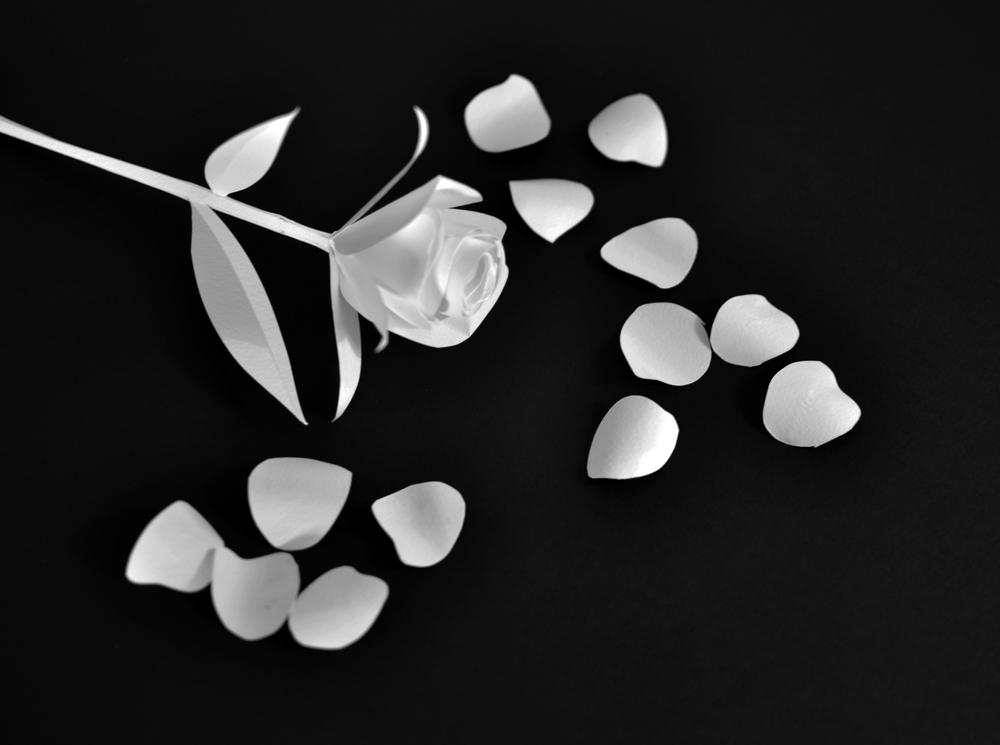 flower and petal 4.jpg