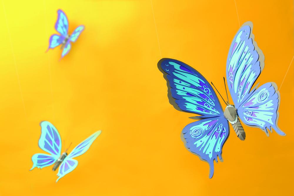 butterfly_final_shot1.jpg