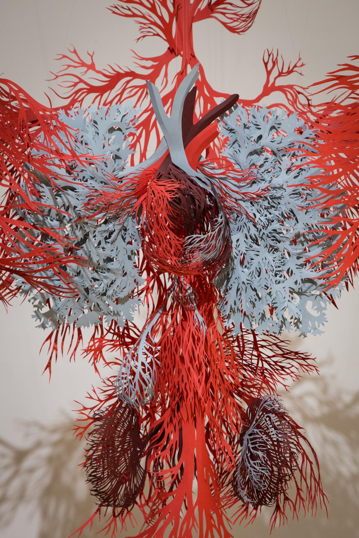 Anatomic - 2015