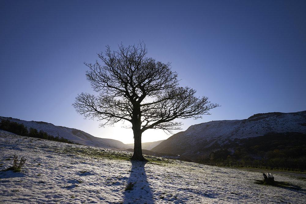 Dovestone Tree 3.jpg