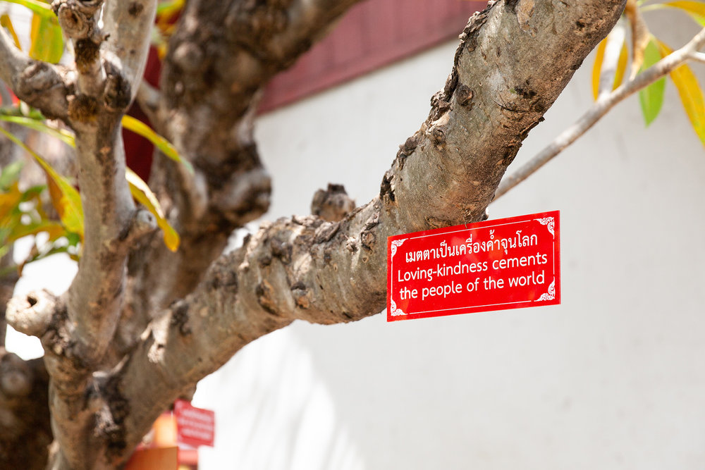 Red proverb cards hang from a tree inside Wat Chiang Man