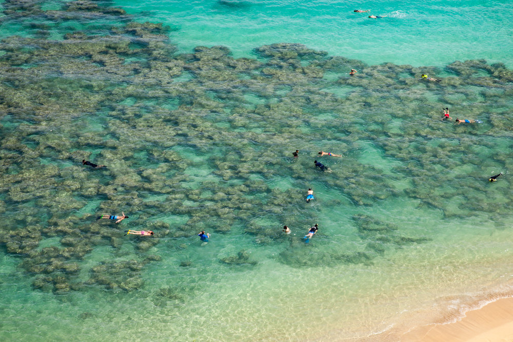 snorkelers enjoying the coral reefs