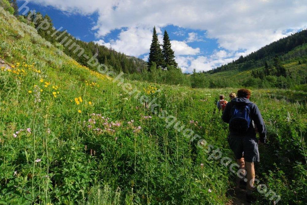 Hikers in meadow Jackson 8-11_064_02.jpg