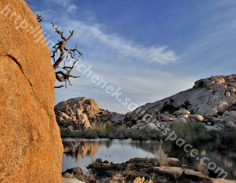 Joshua Tree 3-11_24.jpg