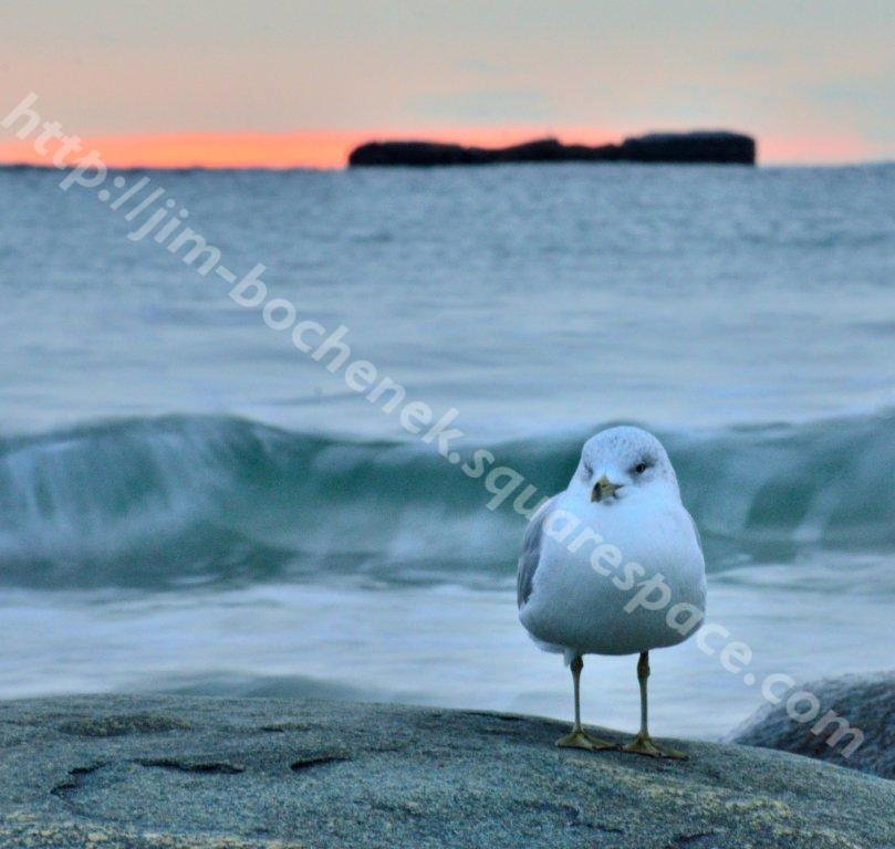 Bird at Wells Beach Arethusa Falls NH 11-29-12.jpg