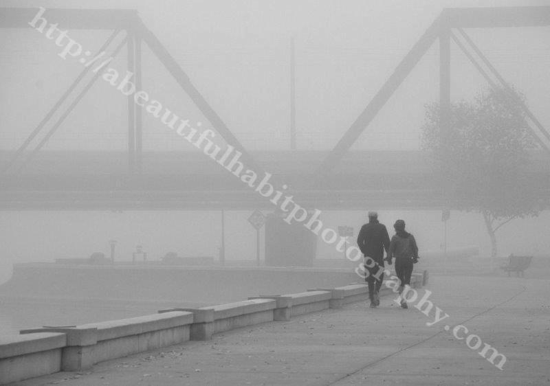 Fog 2-1-15_114 (2).jpg
