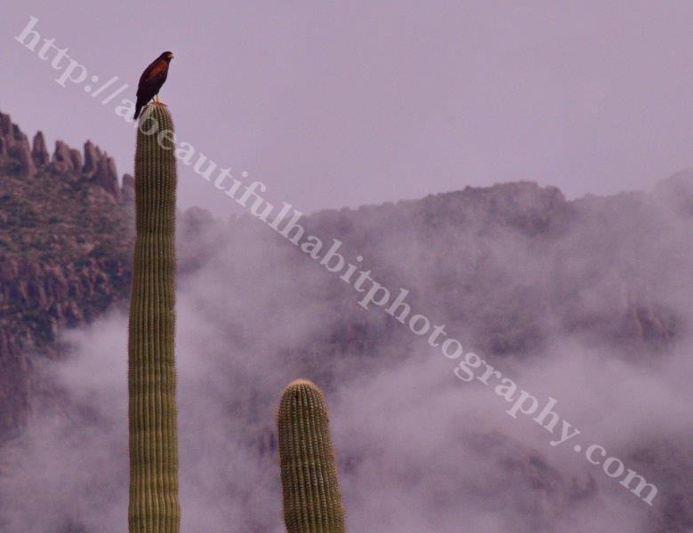 Superstitions 9-22-15_124.jpg
