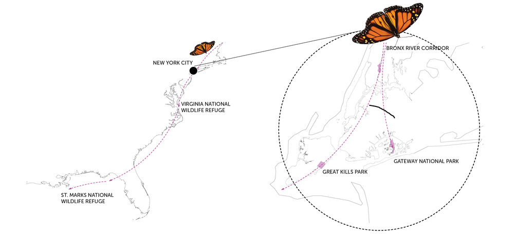 NEW YORK CITY MONARCH MIGRATION