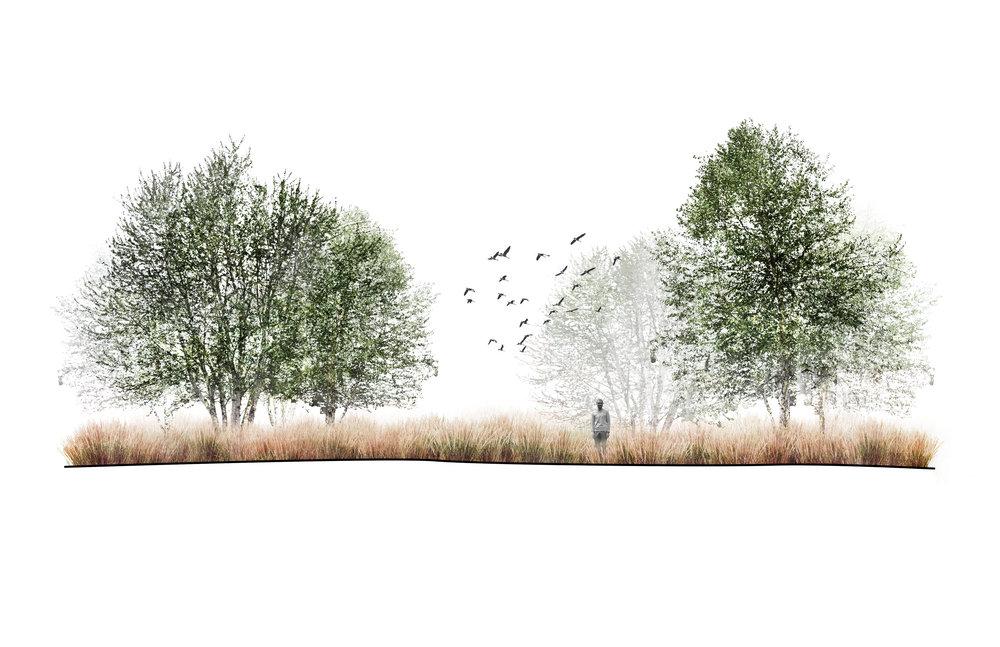 2. Grassland.jpg