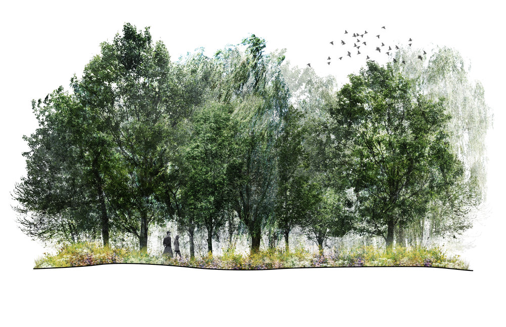 3. Woodland.jpg
