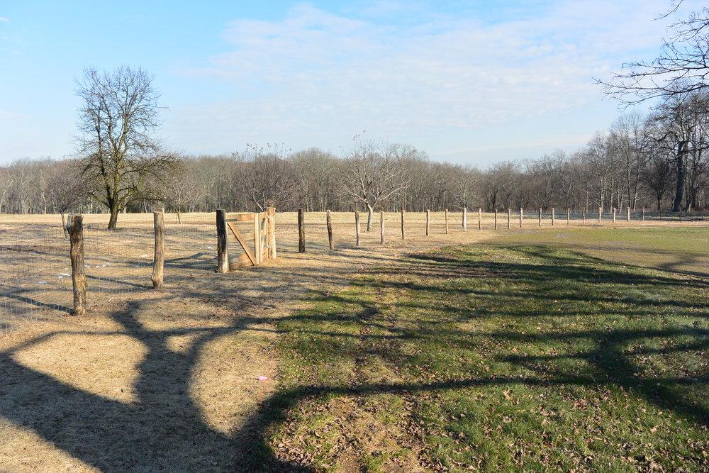 meadow_fence_before_seeding.JPG