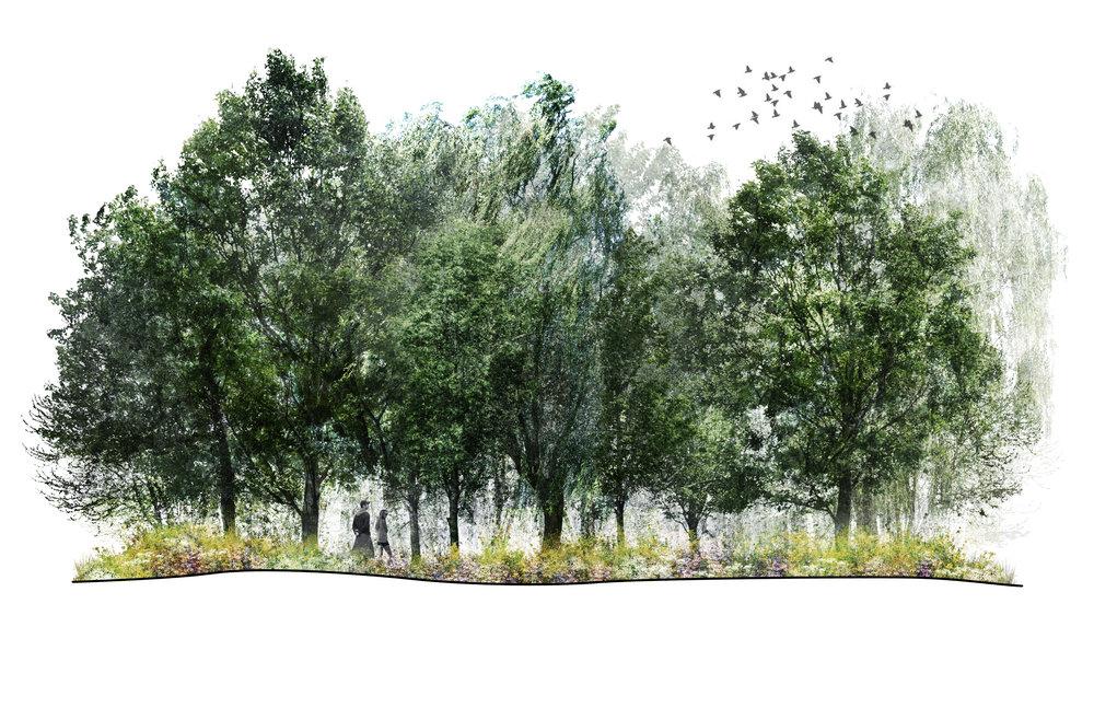 Birch, Locust, Poplar Forest