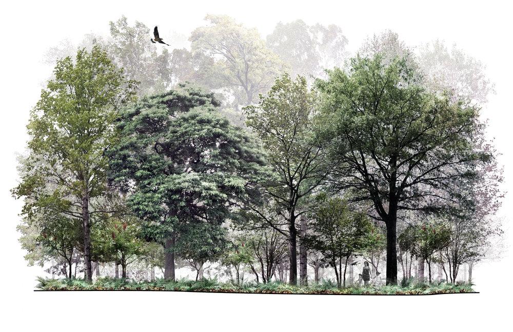 Mature Upland Forest