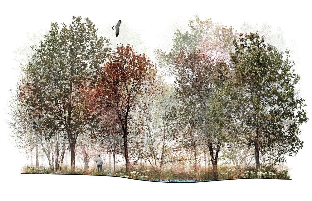 Mature Coastal Forest