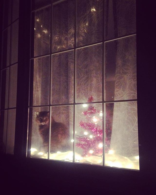It's starting....How many festive kitties will be spotted during the holidays?! Thank you #southphilly for this gem! 😻🎄⛄️❄️❤️ #instacute #catsofinstagram #welovecats #petsitting #philapets #philly #holidayspirit